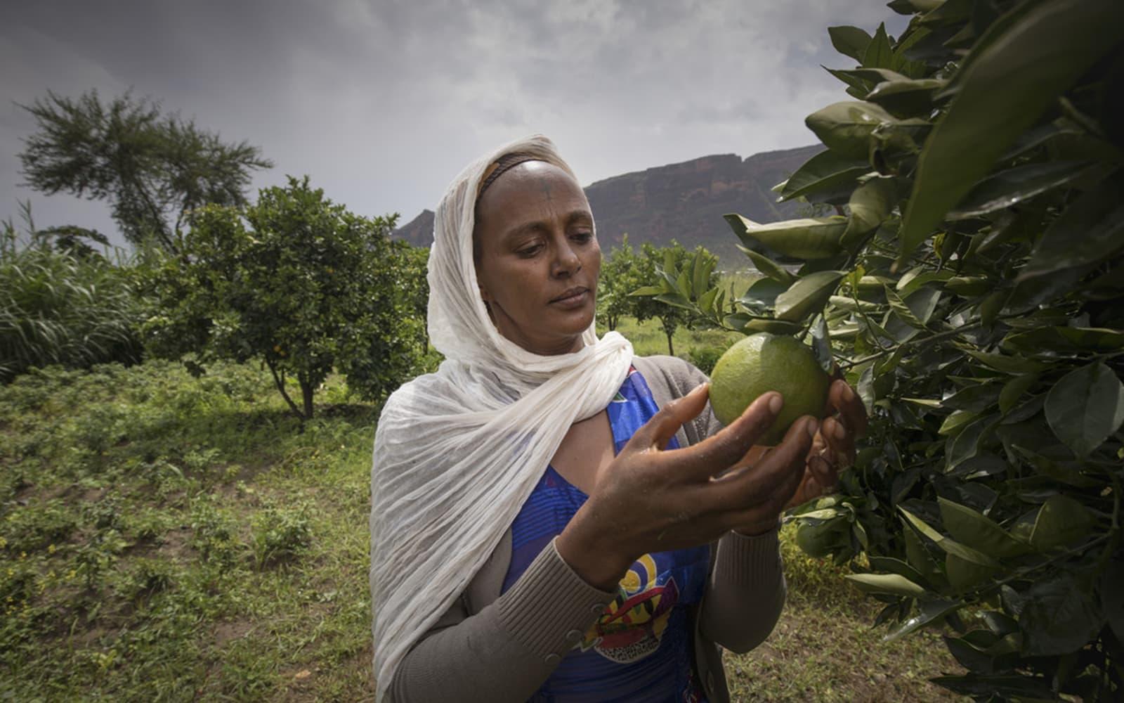 Une femme cueille un fruit sous un ciel orageux