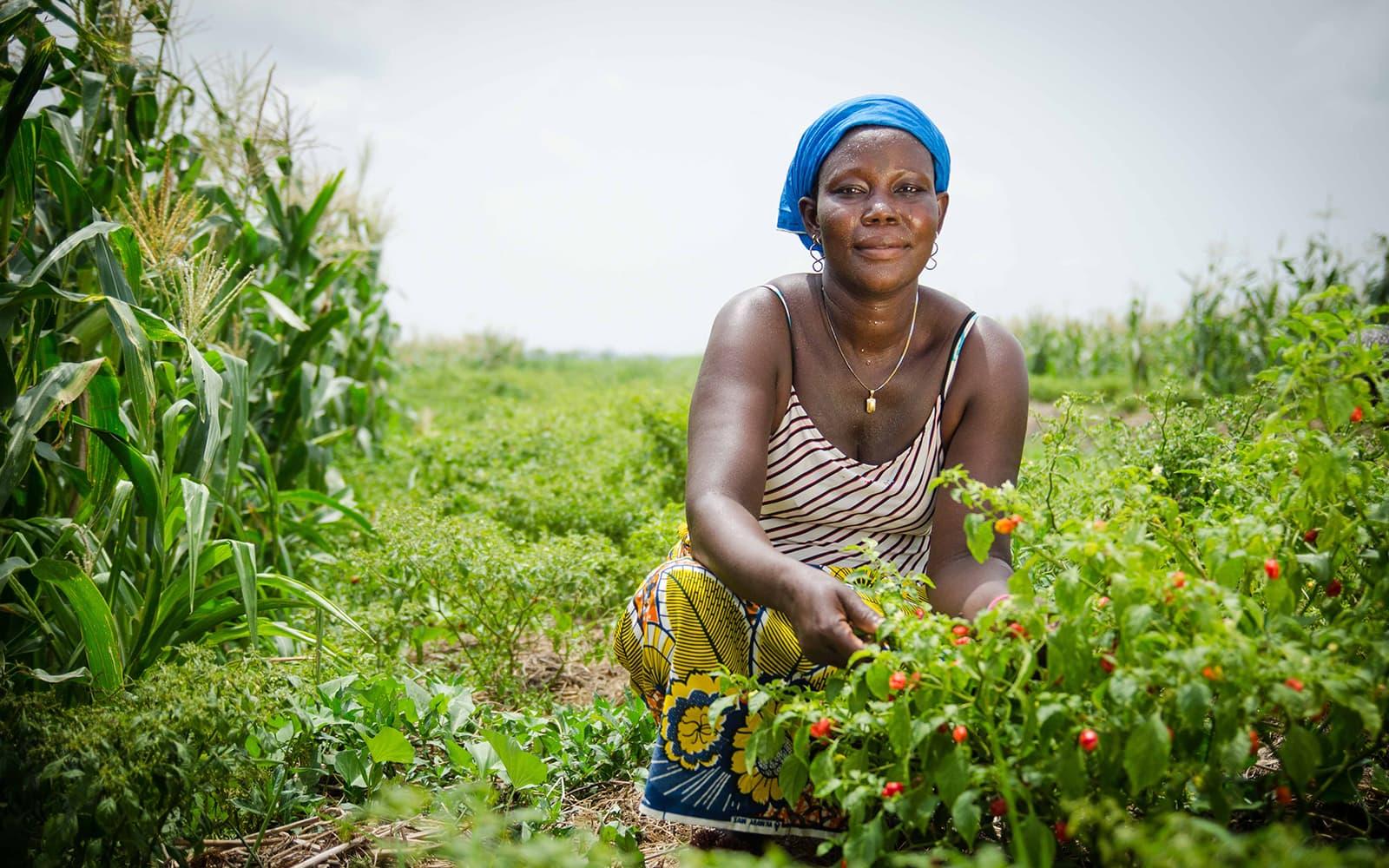 Une femme au Bénin est agenouillée dans son champ et nous montre ses plants dans le cadre d'un projet en agriculture